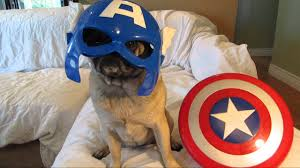 earth u0027s mightiest heroes are avenger pugs youtube