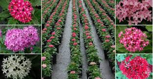 redland farms inc growers of quality flowering plants