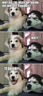 Funny Tequila Memes - what joke did this comedy genius puppy tell tequila memes and