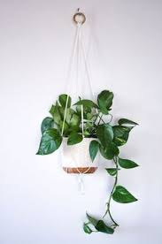 White Hanging Planter by Easy Home Diy Macrame Plant Hanger Tutorial Macrame Plant