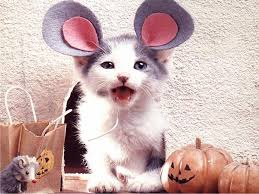 cute and funny cat halloween costumes gallery ebaum u0027s world