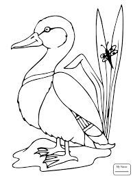 birds mallard duck mallard coloring pages for kids colorpages7 com
