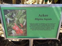 native edible plants growing edible plant scene in phoenix brings native fruits to