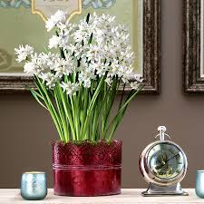 fragrant plant gifts lavender gardenia fresh herbs and more