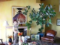 fig tree how to care for indoor plants
