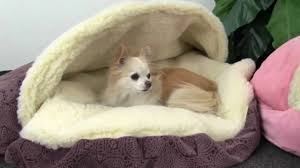 Cave Beds For Dogs Luxury Cozy Cave Covered Dog Bed Youtube