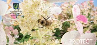 Mn Landscape Arboretum by September 15 U2013 Mn Landscape Arboretum Pollinator Summit