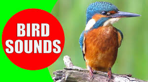 bird sounds for kids part 1 bird identification children