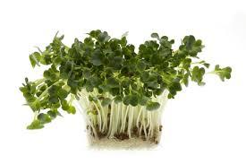 pousse pousse cuisine un jardin dans votre cuisine gingras jardiner
