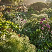cerrado sunrises and morning mists the international garden