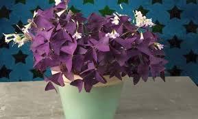 beautiful house plants 8 beautiful easy to grow houseplants care2 healthy living
