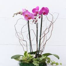 Orchid Delivery Arcadia Florist Flower Delivery By Md U0027s Florist