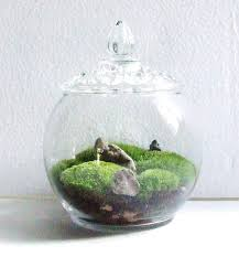 moss and 183 best terrariums moss images on plants