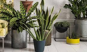 The Best Indoor Plants Where To Buy Indoor Plants Darxxidecom