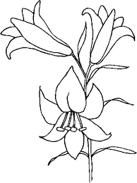poinsettia coloring pages lily flower coloring pages download and print lily flower