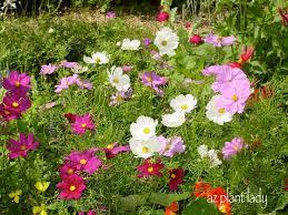Fall Garden Plants Texas - 35 best drought tolerant plants images on pinterest garden