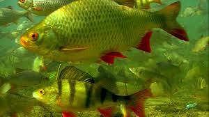 relaxation underwater video not for fishermen biggest in the