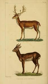 vintage engravings of reindeer and santas google search