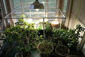 Grow Room Lights Innovative Indoor Tomato Grow