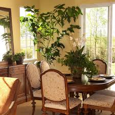 indoor palm how to care for fishtail palm hgtv