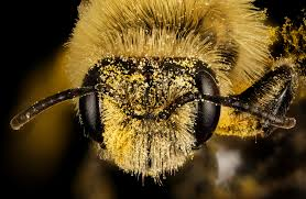 the secret smart life of bees science friday