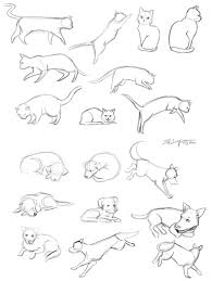 cat and dog sketches by kristaia on deviantart