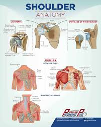 Basic Shoulder Anatomy 9 Facts About Shoulder Pain While Pitching All Baseball Players