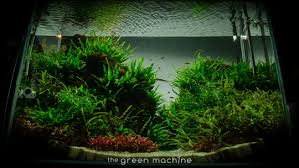 Planted Aquarium Aquascaping Altitude U0027 Aquascape By James Findley The Green Machine