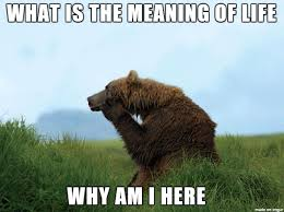Bear Memes - thoughtful bear meme on imgur