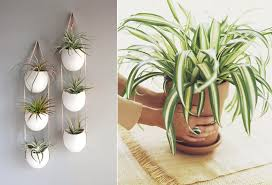 Air Purifying Plants 9 Air by 9 Low Maintenance Indoor Plants That Purify The Air Around You