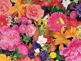 flower wallpaper wallpapernebula