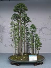 bonsai saule pleureur você é certo sentir o zen após você ver estes 51 bonsai