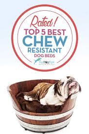 top 6 best indestructible dog bed brands 2017 update