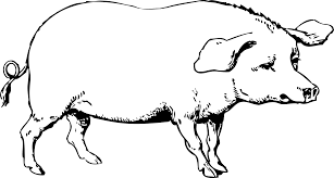 black and white clipart of pig clipartxtras