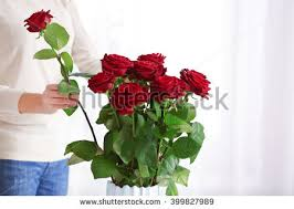 Putting Roses In A Vase Blossoming Put Stock Images Royalty Free Images U0026 Vectors