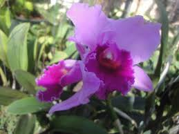 picture of bai orchid and butterfly farm chiang mai