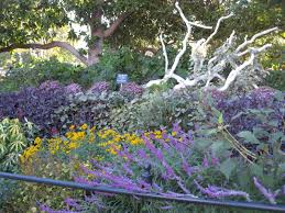san antonio native plants san antonio uconnladybug u0027s blog