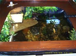 indoor turtle pond setup suggestions wanted monsterfishkeepers com