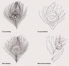 art prompt 8 ways to draw a peacock feather from the book