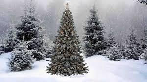 christmas tree snow cheminee website