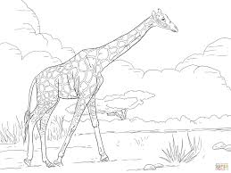 reticulated giraffe coloring free printable coloring pages