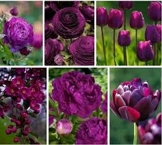Love Flowers 782 Best Love Flowers Images On Pinterest Flowers Plants And Nature