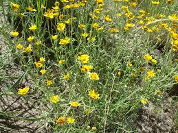 native plants names xeric gardening xeric plants