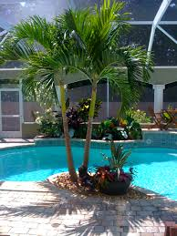 tropical poolside landscape plantings tropical poolside