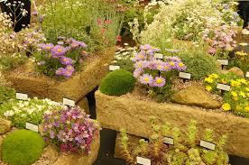 4 most beautiful gardening flowers your garden missing tingtau