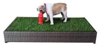 Dog Patio 5 Best Indoor Doggy Potty Solutions To Free You From The Leash