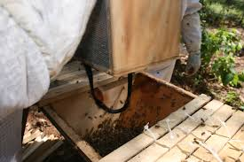 how to remove and relocate a wild honey bee hive video