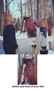 horse mask halloween city my friends went to a horse ranch today funny