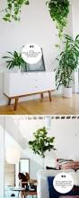 28 best plantsss images on pinterest gardening greenhouses and