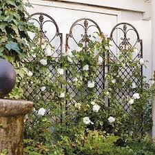 71 best trellis images on pinterest garden trellis gardening